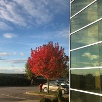 my-window-tree-2020_384x384.jpg
